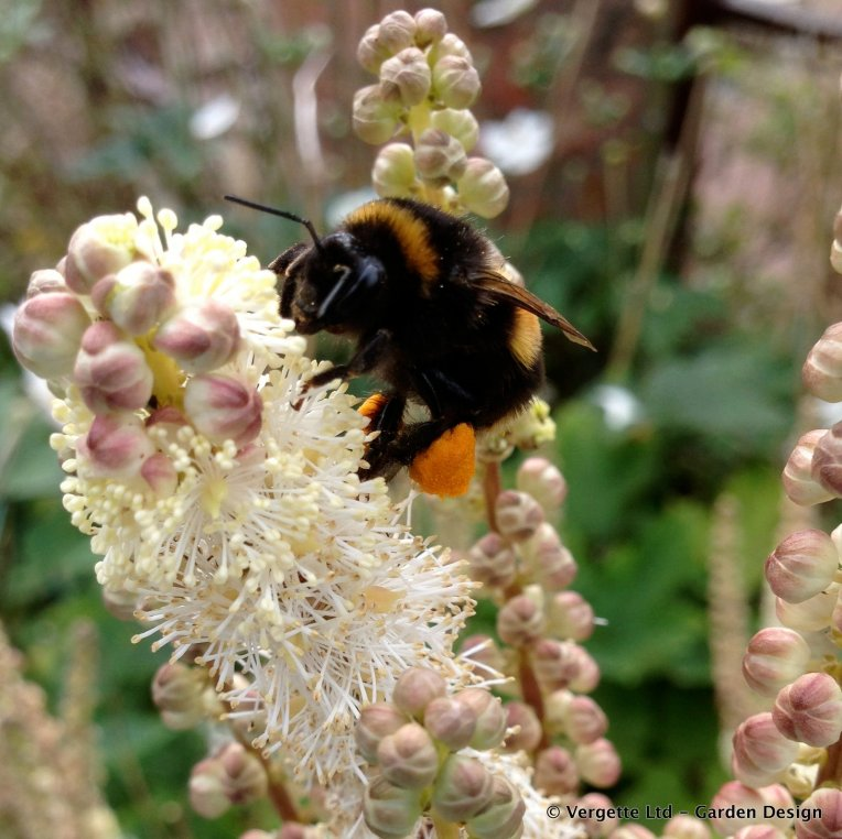 Bee and Actaea