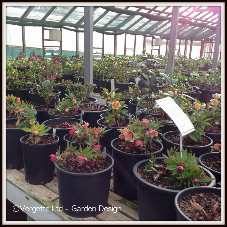 Ashwood Nursery Glasshouse