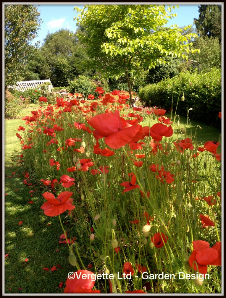 Vergette Ltd Garden Design River of Poppies WW1 Centenary Tenbury Wells