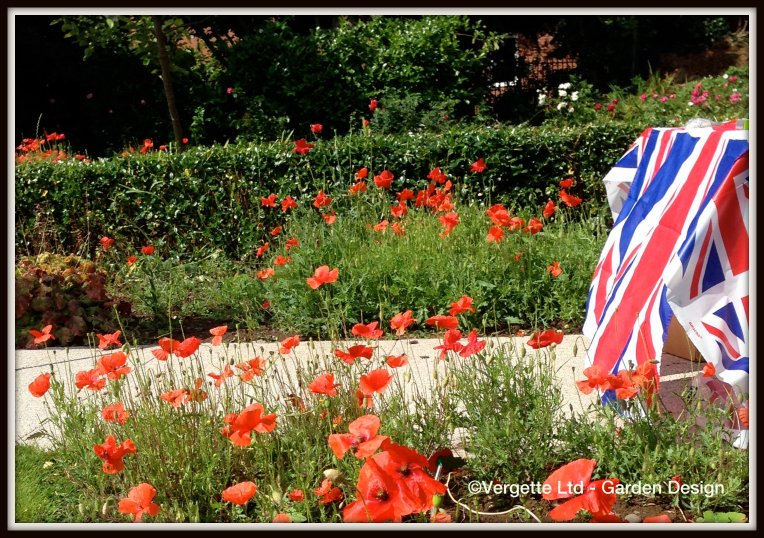 WW1 Centenary Poppies Vergette Ltd Garden Design