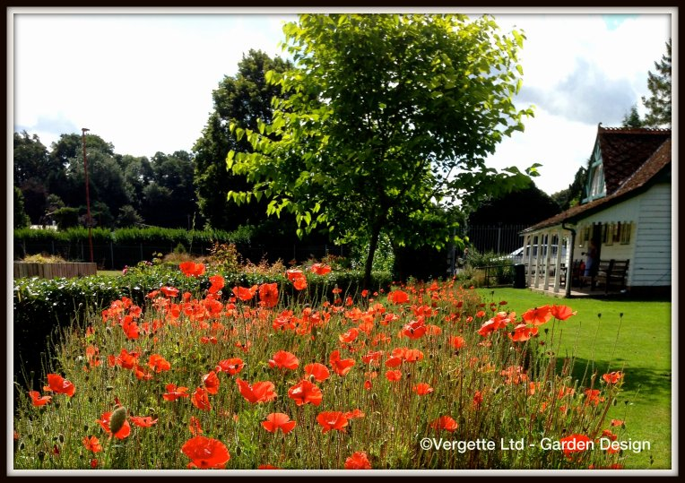 WW1 Centenary River of Poppie Tenbury Wells Vergette Ltd Garden Design