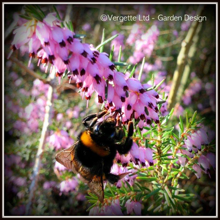Bees's Breakfast