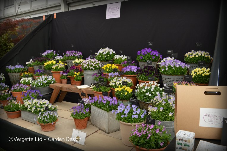 Sadly the perching bench was not for sale - unlike the Wildegoose Violas which were.