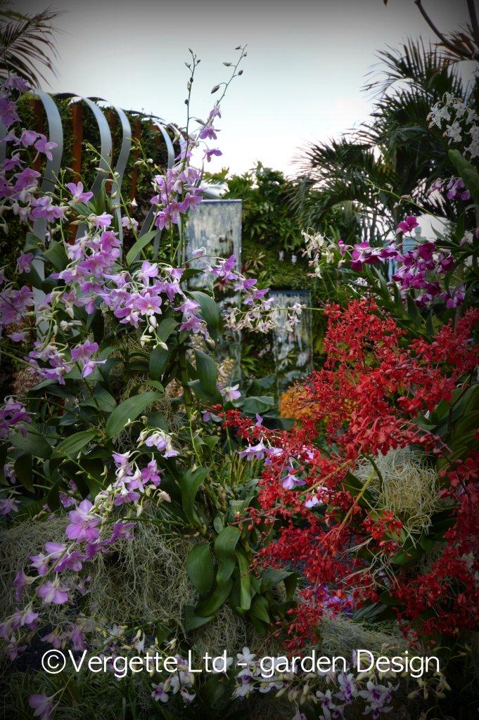 Orchids Hiding in plain sight -The Hidden Beauty of Kranji