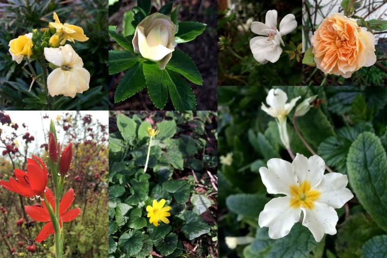 Flowering Dec 2015