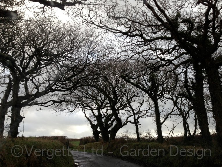 Vergette Ltd Garden Design Winter Trees Clovelly North Devon