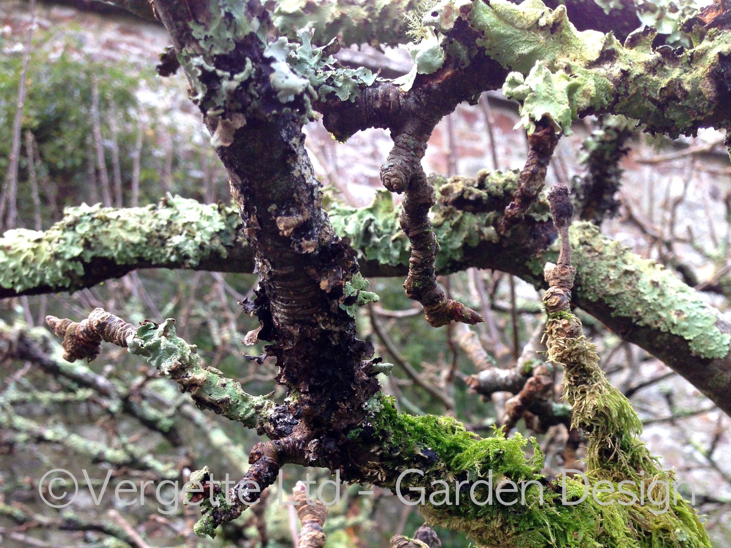 Old Orchard Vergette Gardens