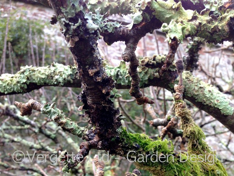 Vergette Ltd Garden Designer Lichen and Moss Old Orchard