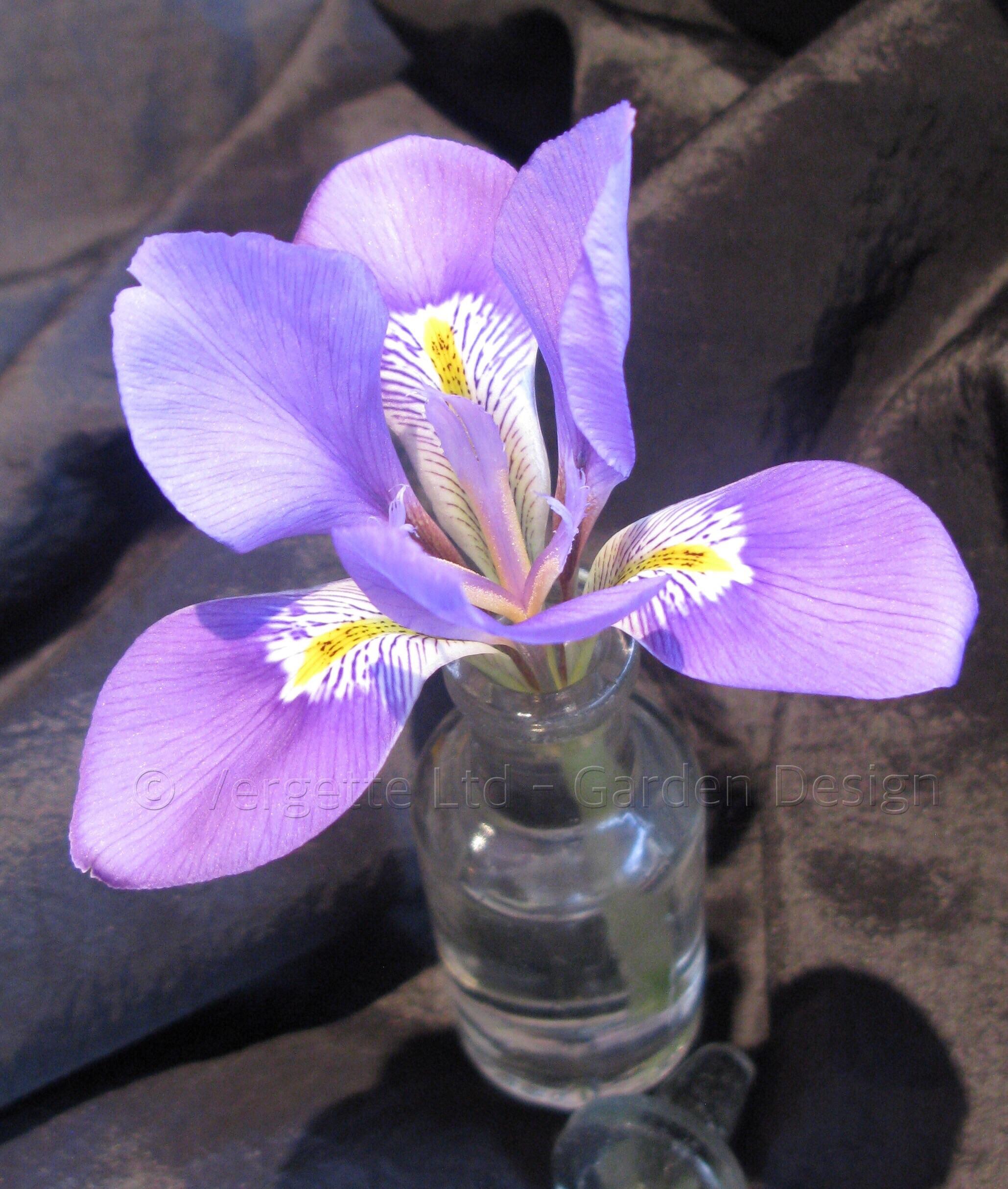 message in a tiny bottle u2013 vergette gardens