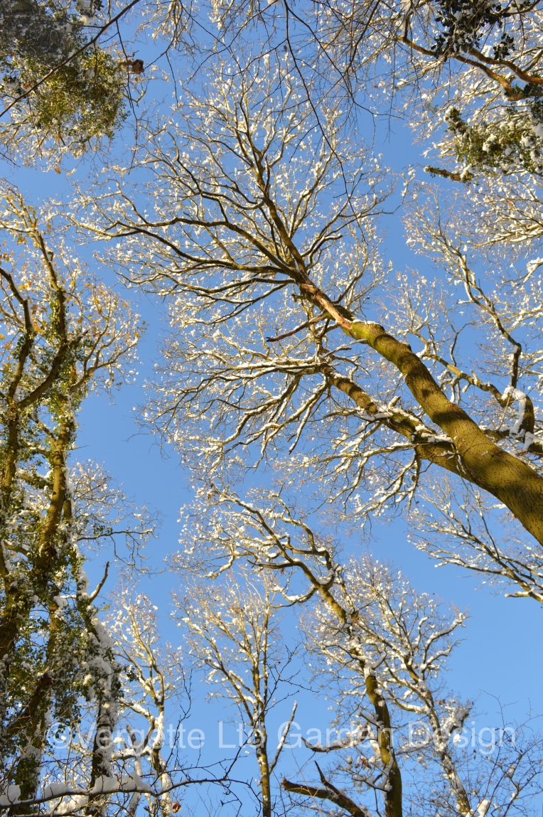 Example of Crown Shyness in Oaks